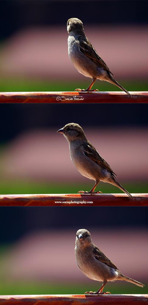 A bird with attitude