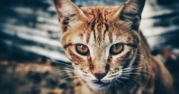 """""""Cats will amusingly tolerate humans only until someone comes up with a tin opener that can be operated with a paw.""""  ― Terry Pratchett"""