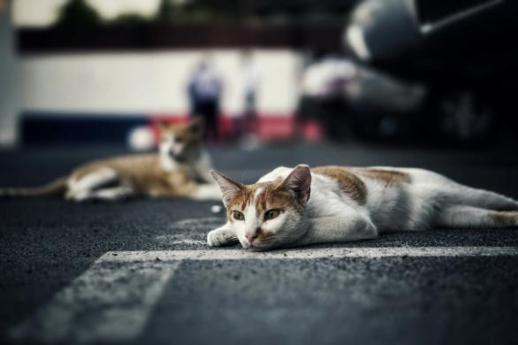 AJE parking wildlife